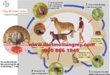 diệt ve chó, dịch vụ diệt ve chó