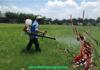 diệt muỗi tại đồng nai