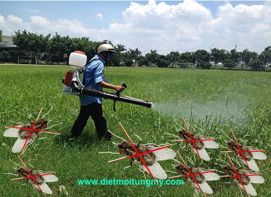 diệt ruồi, dịch vụ diệt ruồi