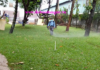 dịch vụ diệt muỗi tại cần giờ