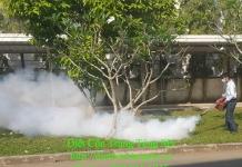 diệt muỗi tại quận 11