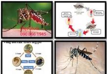 diệt côn trùng tại thuận an
