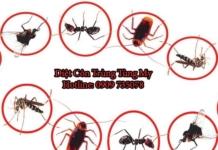 diệt muỗi bình chánh