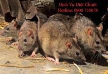diet chuot nha xuong